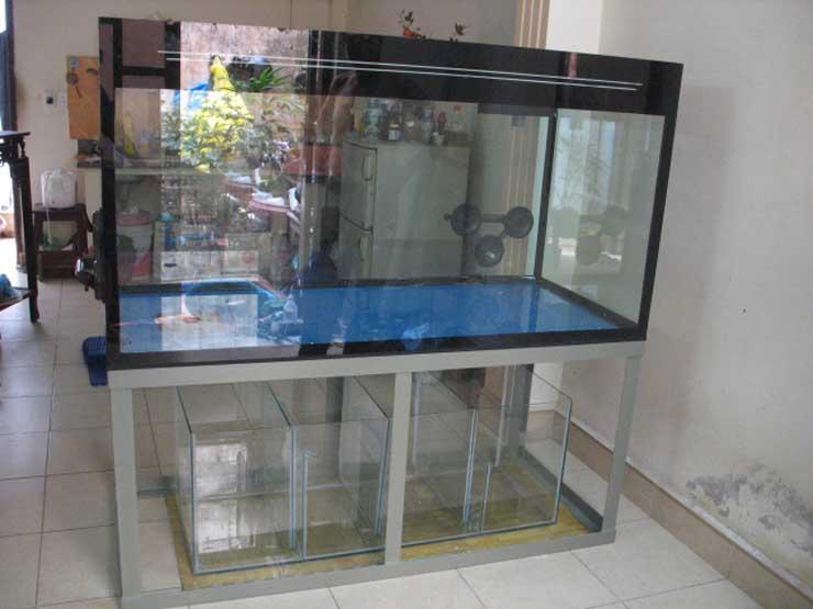 hồ cá kính cường lực 3